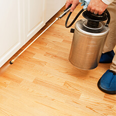 IMPORTANCE OF ANNUAL HOUSE CLEANING AND PEST CONTROL